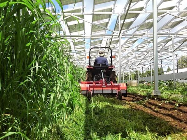 耕作放棄地とクリーンエネルギー。ふたつの課題への立ち向かい方