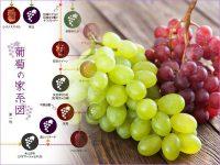 葡萄の家系図を見ながら選ぶ ブドウの品種と産地や特徴【果物ガイド】