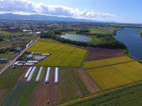 農業と観光業を組み合わせ、通年雇用実現。札幌で都市型農業をしませんか