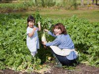 大根の栽培を成功させるポイントとは【プランターで手軽にできる】