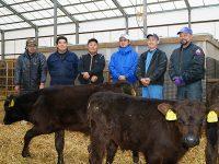 ブランド牛の子牛を育て、GPSで畑耕す。北海道安平町「中道農場」
