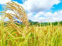 水管理の自動化で、米農家の負担を軽減!富山発・スマート農業ベンチャーがサービス開発