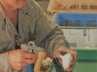 【第5回】安心して働ける農業法人に! 公的保険制度を理解する