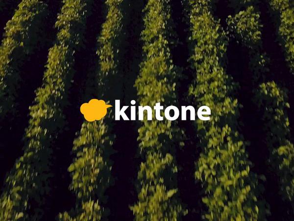人材不足と収量アップを情報共有でサポート。『キントーン』で自分たちの農業を快適に。