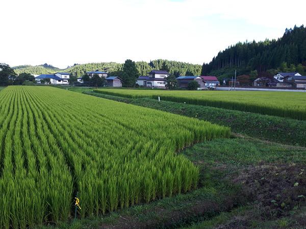 【第6回】農地を所有したい! 農地所有適格法人となるには?