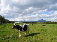 酪農が盛んな地域を支える貴重な人材に。酪農ヘルパーとして働きませんか