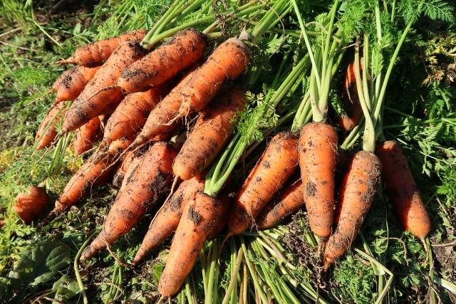農家がネットで野菜を販売?農家直送サイトを使うメリット・デメリット