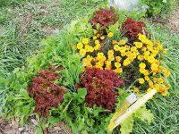 野菜づくりの新常識はどこから生まれたか【畑は小さな大自然vol.20】