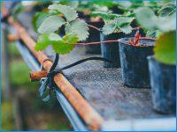 潅水時間の削減や病気の蔓延を抑制する「ラブマットU」(ユニチカ)の魅力を紹介