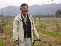 ブドウ栽培に18人移住、面積も16倍に ワインの「産地化」成功の秘訣は