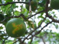 豪雨の農業被害150億円、宇和島市のミカン農家へ 和歌山の農家が支援募集中!