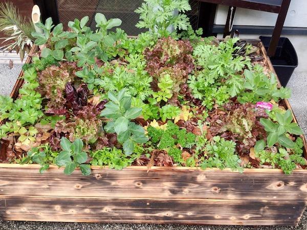 雑草に学ぶ! 小さい畑でたくさんの野菜を育てるポイント【畑は小さな大自然vol.23】