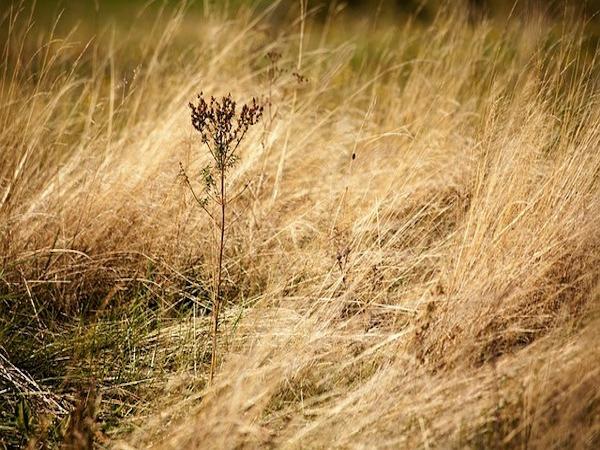 耕作放棄地と荒廃農地って何が違うの? 利活用のための交付金も解説