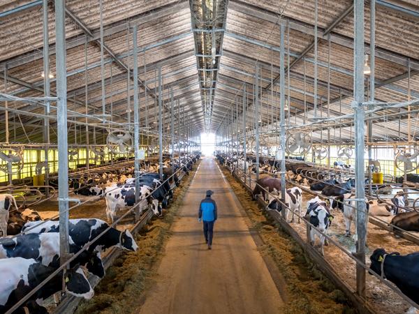 センサーによる見守りで、牛の見回り業務を大幅に軽減する『U-motion®』