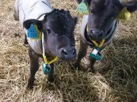 先輩にはIT系出身者も。北海道の『津別ファーム』で和牛を育てませんか