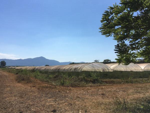 イノチオホールディングス、ラオスで農場設立 人材育成も視野