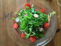 放置栽培で間引き野菜を楽しむ【枯れ専かーちゃんのベランダ菜園】