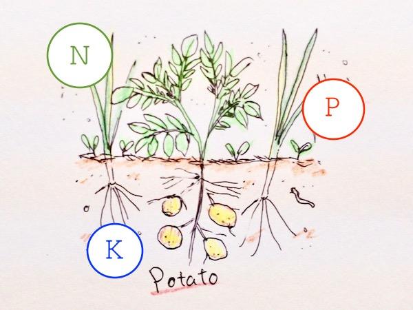 農業も化学だ! 野菜づくりの3大栄養素【畑は小さな大自然vol.24】