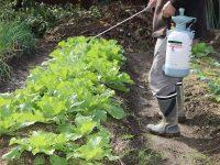 殺菌剤の種類と選び方の基礎知識 病害虫から庭木や農作物を守るには?