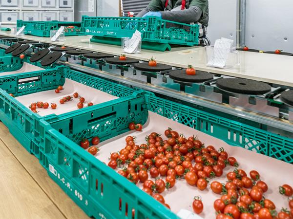 「高糖度フルーツミニトマト」を通年栽培で安定供給――三菱地所グループの株式会社メックアグリ