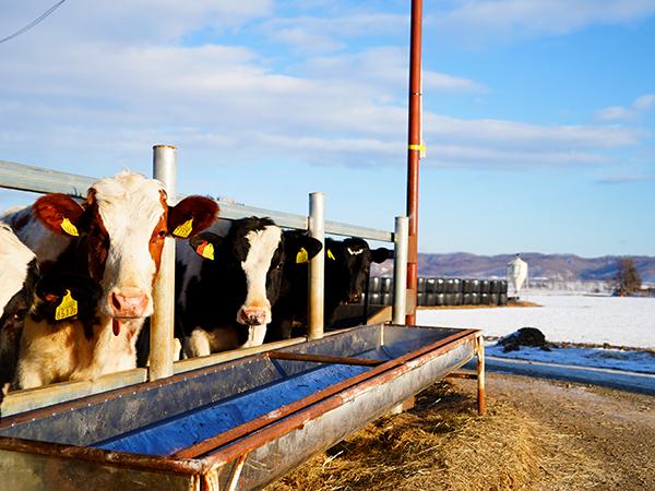 十勝・本別町/山田牧場 全国の酪農家を支える乳牛育成牧場で次代を担う仲間を募集