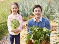 白菜の栽培方法とトラブル対策とは【プランターで手軽にできる】