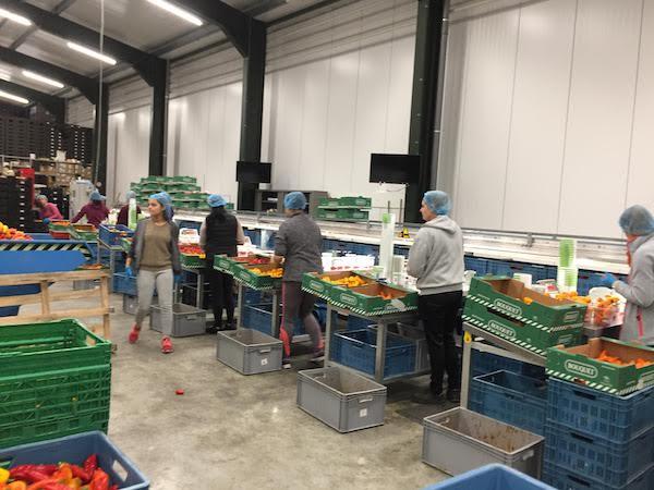 オランダ農業は日本と何が違うの? 〜人材編~