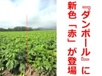 """これは見やすい! 北海道の大規模生産者が待望した""""赤色『ダンポール®』"""""""