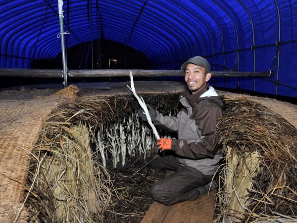 受け継いだのは農法と伝統 三島独活で地域に根を下ろす