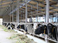 先端技術で効率アップ!攻めの農業経営事例