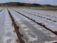 抜群の保温効果、防霜、防鳥効果を発揮。農業用不織布『アイホッカ』が雪国で支持される理由