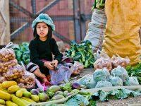 日本企業に商機 激変する東南アジアの生鮮品流通事情