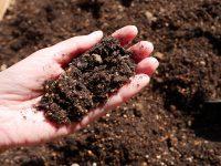 土のリサイクル、簡単な方法は?【枯れ専かーちゃんのベランダ菜園】