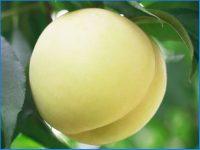 【岡山県①】就農率96%<sup>※</sup>。 晴れの国おかやまで就農する魅力とは