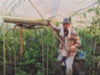 省スペースで少量多品目を実現! 40代脱サラ有機農家のパッチワーク農法