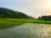 【ふるさと納税】青森県のブランド米『まっしぐら』おすすめ5選