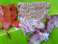【ふるさと納税】産地直送 美味しい「鯛」おすすめ自治体5選