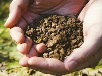 土作りの名人に聞いた、有機栽培の肥料の役割とは