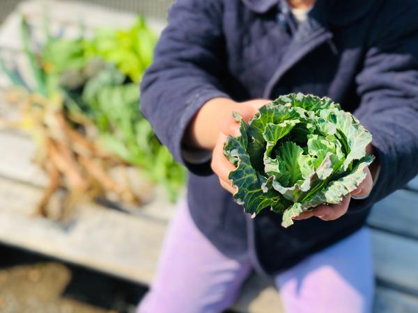 【親子で農業体験】「足立区都市農業公園」で野菜の収穫にチャレンジ!