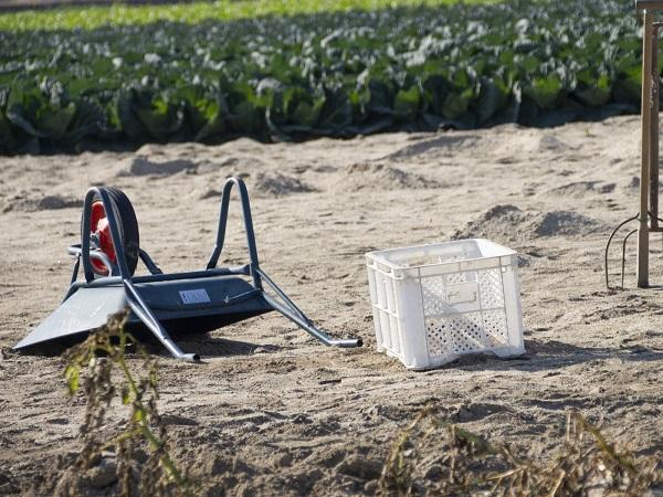 研修生の35%が4年以内に離農 総務省が農水省に改善勧告
