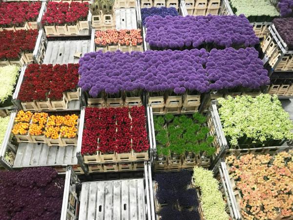 花大国オランダ 世界規模のアールスメールに学ぶ花市場の未来