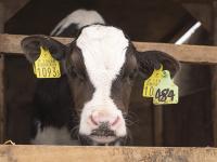 素牛育成が専門の北海道士別市『東武牧場』で、子育ての極意学びませんか