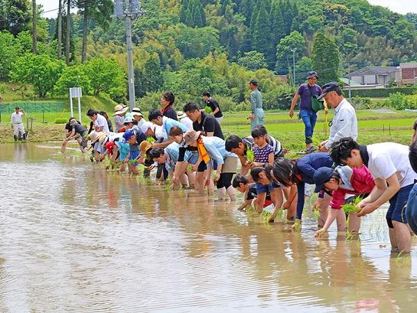 自然の中で農と食を体験! 千葉・長南町で田植え体験イベントを開催