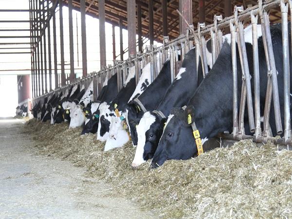 宇宙に湧く! 北海道大樹町にある『サンエイ牧場』で酪農生活始めませんか
