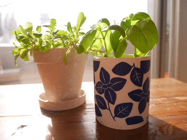ギフトやインテリアにも。室内で育てられるかわいい栽培キット【枯れ専かーちゃんのベランダ菜園】