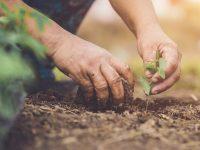自然農法とは? 土作りや家庭菜園での取り入れ方法をご紹介!