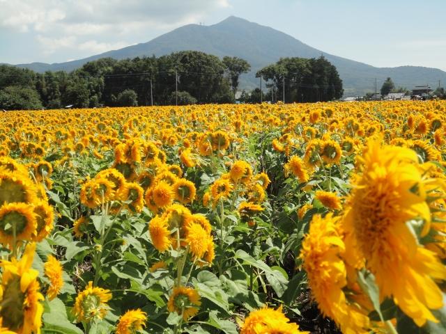 【ふるさと納税】茨城県のおすすめ返礼品5選!水戸藩が作った日本遺産とは