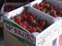 夫婦で、いちご農家になりませんか。北海道豊浦町で地域おこし協力隊募集