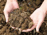 その耕し方、実は間違い!? 野菜がのびのび育つ3層構造の畑の土づくりとは