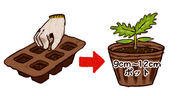 ミニトマト栽培